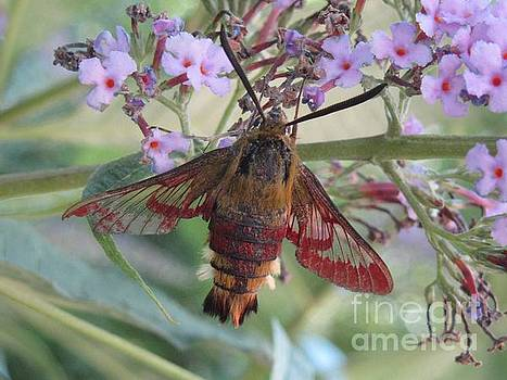 Hummingbird butterfly by Jeepee Aero
