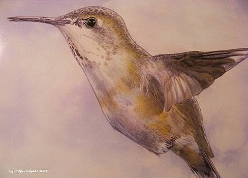 Hummingbird by Crispin  Delgado
