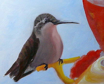 Hummingbird Feeder by Betty Pimm