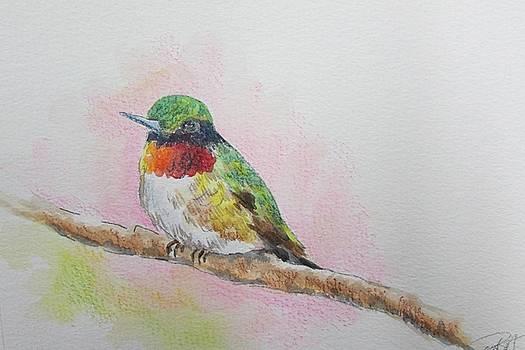 Hummingbird II by Gloria Turner