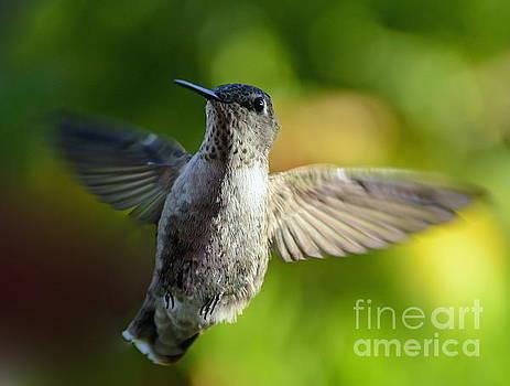 Hummingbird in Flight by Marilyn Smith