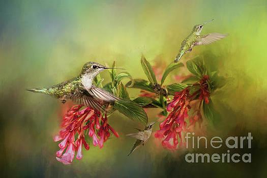Hummingbird Paradise by Pam  Holdsworth