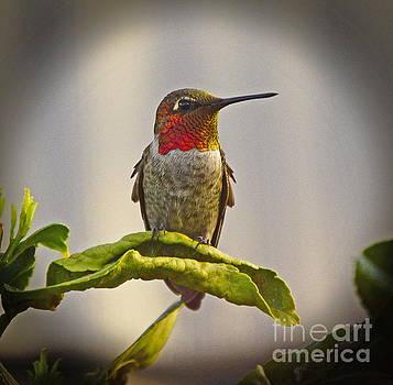 Hummingbird Portrait by Marilyn Smith