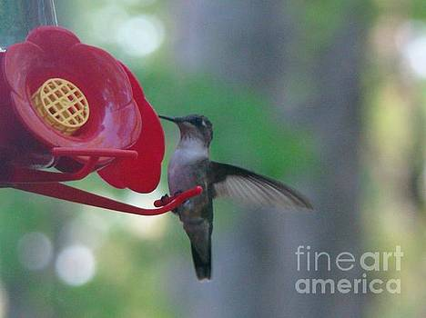 Hummingbird  by Rand Herron
