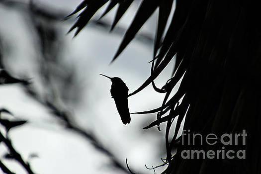 Hummingbird Silhouette II by Al Bourassa