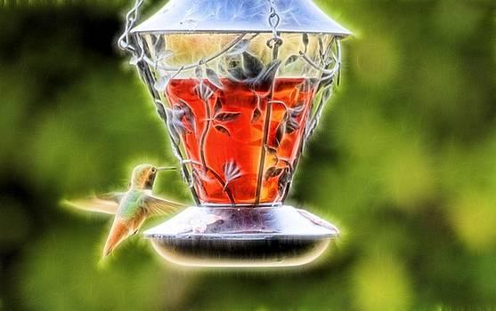 Cindy Nunn - Hummingbird Spring