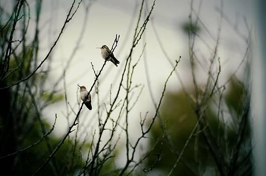 Cindy Nunn - Hummingbirds at Rest 1