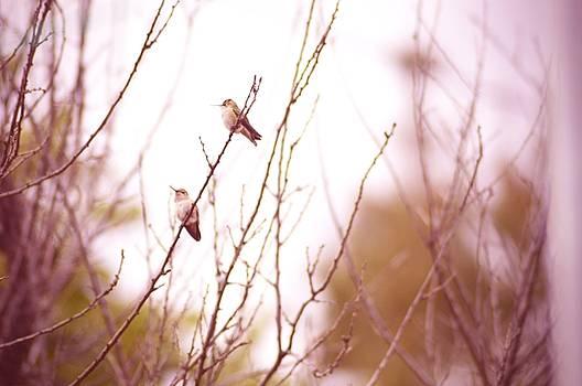 Cindy Nunn - Hummingbirds at Rest 2
