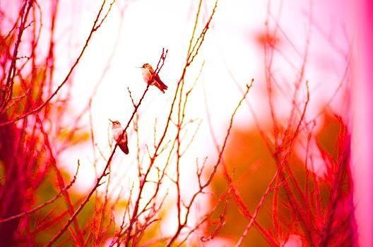 Cindy Nunn - Hummingbirds at Rest 3