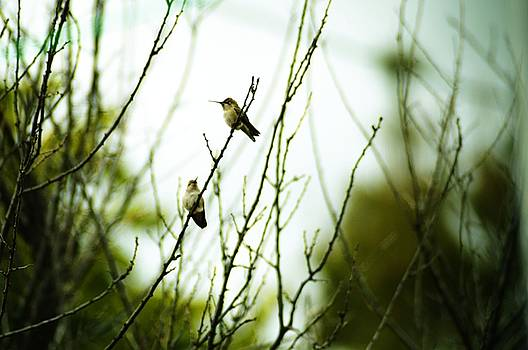 Cindy Nunn - Hummingbirds at Rest 4