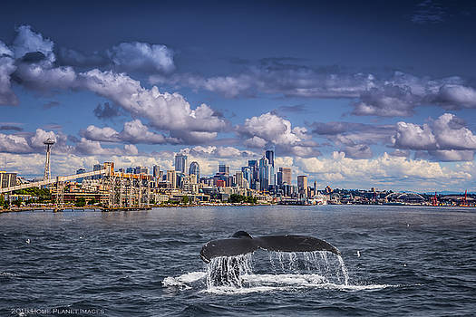 Humpback Whale-Seattle by Janis Knight