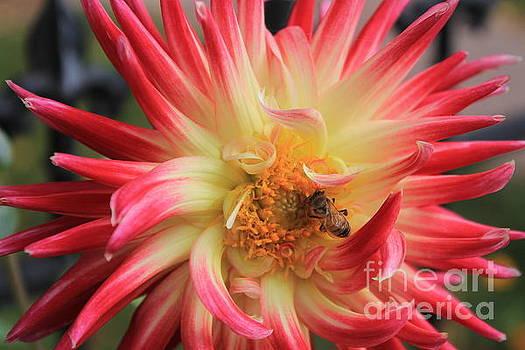 Hungry Bee by Teresa Thomas