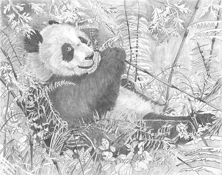 Hungry Panda by Dean Herbert