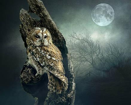 Hunter's Moon by Brian Tarr