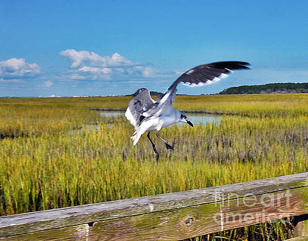 Huntington Beach Marsh by Jeff McJunkin