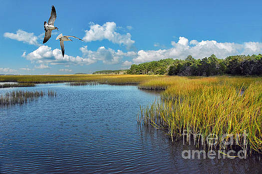 Huntington Beach Marsh Walk by Jeff McJunkin