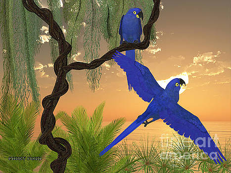 Corey Ford - Hyacinth Macaws