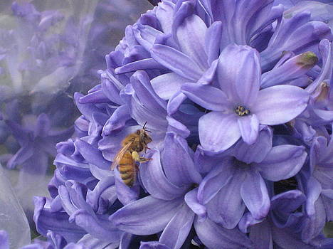 Hydrangea and Bee by Renee Antos