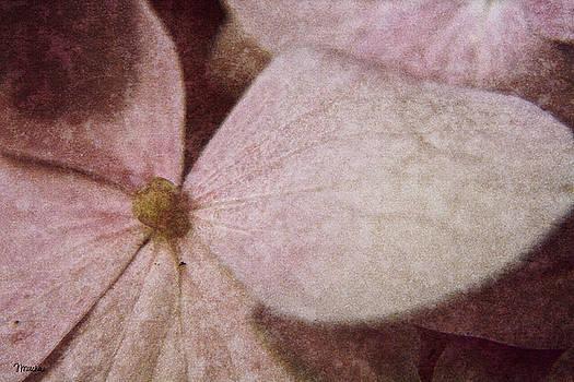 Teresa Mucha - Hydrangea Blossom