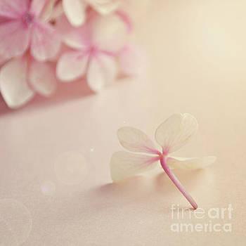 Hydrangea Flower by Lyn Randle