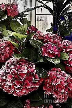 Hydrangea Greenhouse by Marsha Heiken