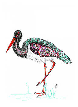 I AM a Stork by Emma Kinani