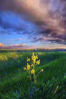 I Can See You When I Close My Eyes by Phil Koch