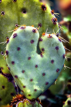 I Heart Prickly  by Saija Lehtonen