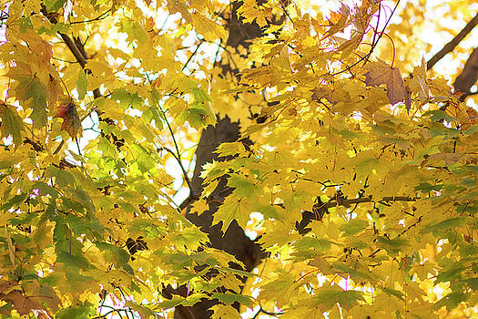 I Love Fall Leaves by Tammy Chesney