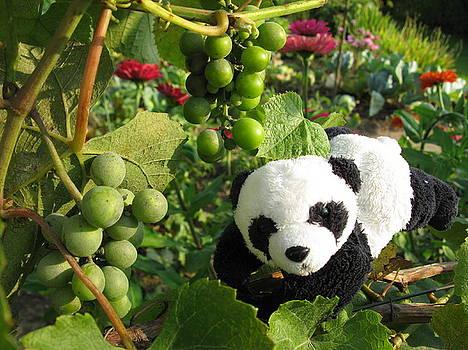 I love grapes B by Ausra Huntington nee Paulauskaite