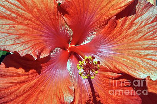 I Love Orange Flowers 2 by Lydia Holly
