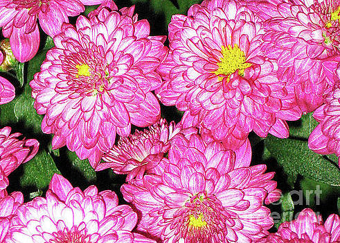 I Love Pink Flowers by Lydia Holly