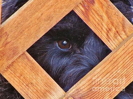 Look Closely  by Michele Penner