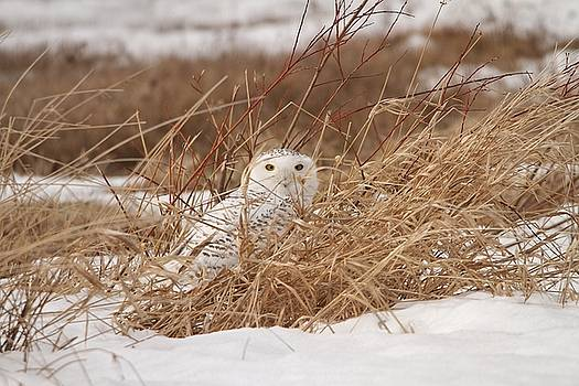 I Spy with My Little Eye by Teresa McGill