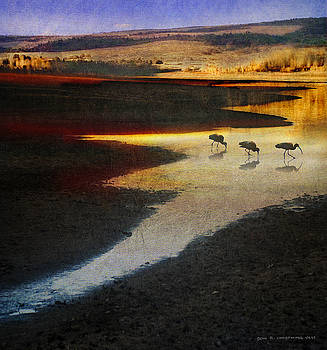 Ibis At Lakes Edge by R christopher Vest