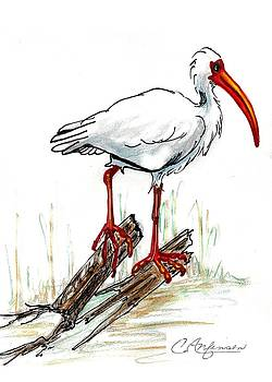 Ibis on a perch by Carol Allen Anfinsen