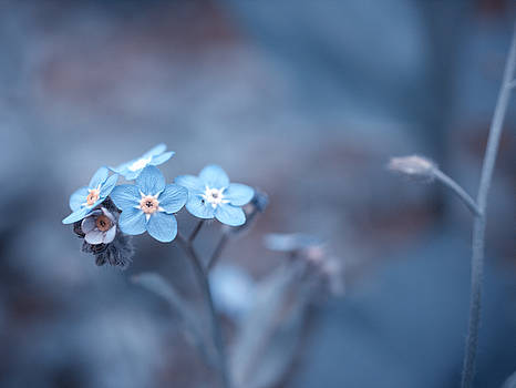 Ice Blue by Rachel Mirror