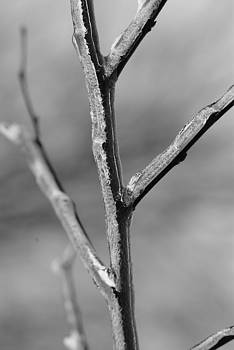 Ice branch by Rich Caperton