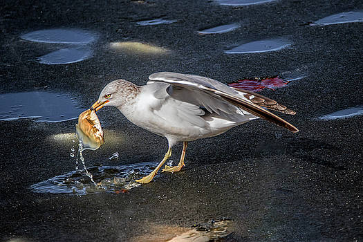 Ice Fishing by Ray Congrove
