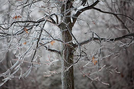 Ice Tree by Jane Melgaard