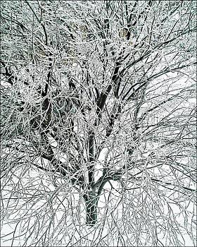 Iced Tree by Jacqueline Mason