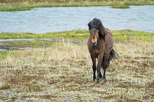 Icelandic Uniqueness.. by Nina Stavlund