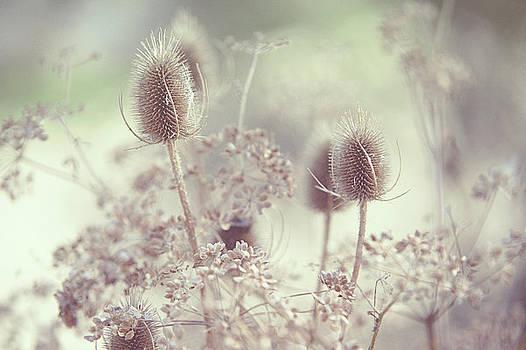 Jenny Rainbow - Icy Morning. Wild Grass