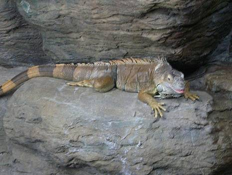 Iguana by Linda Bennett
