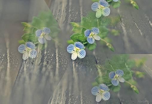 Illusion of spring by Marija Djedovic