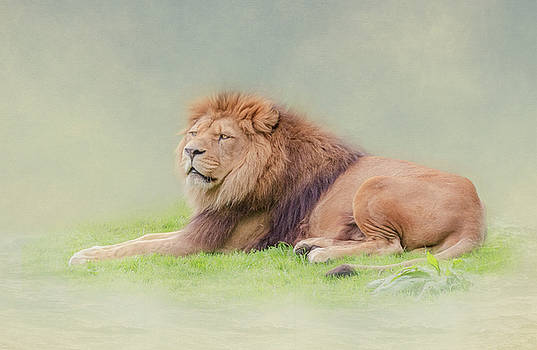 I'm the King by Roy McPeak