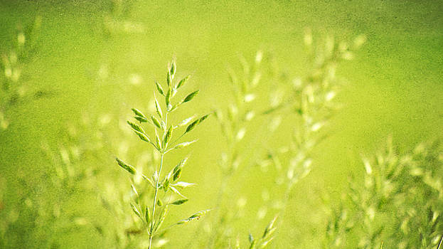 Angela Doelling AD DESIGN Photo and PhotoArt - Impression of grass