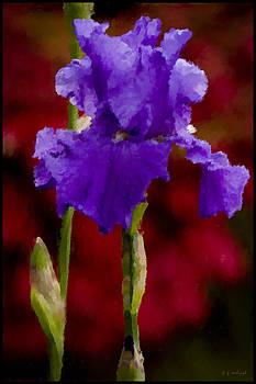 Impressionist Iris by Daniel G Walczyk