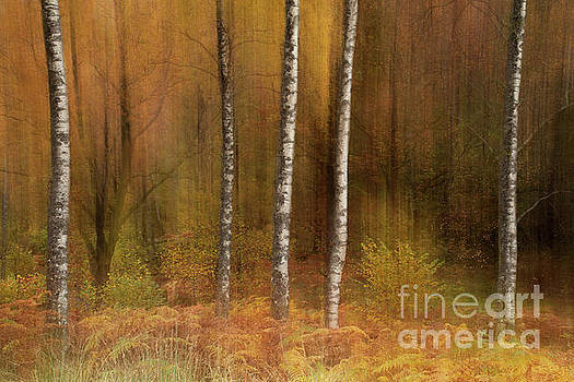 Impressions and Blurred Lines by Martin Williams