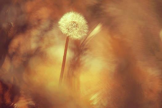In a Magic World by Jenny Rainbow